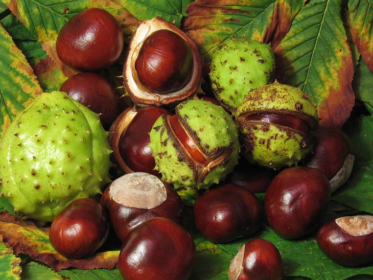 Horse Chestnut Extract, horse chestnut seed extract benefits, chestnut tree leaves