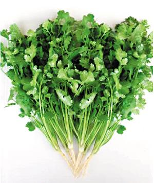 Coriander Powder coriander seed powder cilantro seeds cilantro powder coriander seed oil