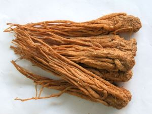 Angelica Extract,angelica herb,dong quai extract,dong quai,